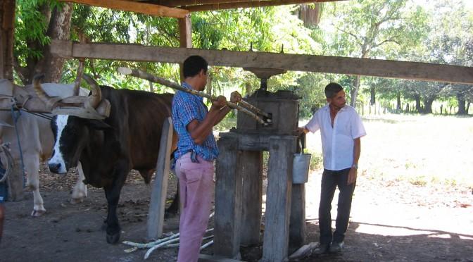 guanacaste traditional sugar processing mill